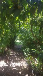 Ecological Lodge Edelweiss, Camino San Jose, Catemu (Km 5,6 Ruta E-635) - Valle del Aconcagua, Catemu, Región de Valparaíso,, Villa de Catemu
