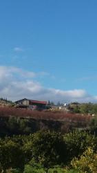 Erson Hocanın Organik Çiftliği, Yeşilırmak Kirbo Yolu Uzeri - Lefke Belediyesi Guzelyurt Ecevit Caddesi, 0090, Ammadhies