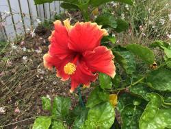 Hibiscus Hideaway, 35 Cooke Road, 4552, Witta