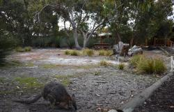 Kangaroo Island Wilderness Retreat, Lot 1 South Coast Road, 5223, Flinders Chase