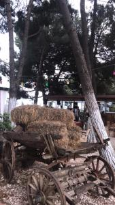 Casa de campo 88 Country (Turquía Orhangazi) - Booking.com