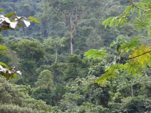 Copalinga Ecolodge