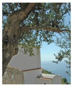 Al Poggio Antico Amalfi