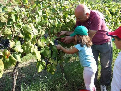 Agriturismo Parra - Santa Lucia del Mela - Foto 34
