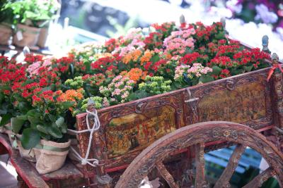 Agriturismo Il Sole e Il Sale  - Acireale - Foto 11