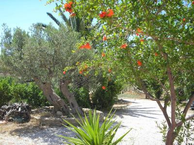 B&B Casa Malerba - Palma di Montechiaro - Foto 15