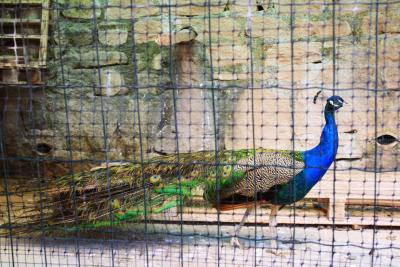Agriturismo Le Rocche - San Piero Patti - Foto 11