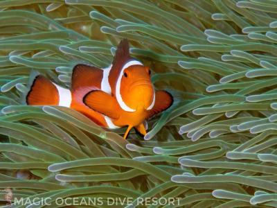 Magic oceans dive resort anda philippines - Magic oceans dive resort ...