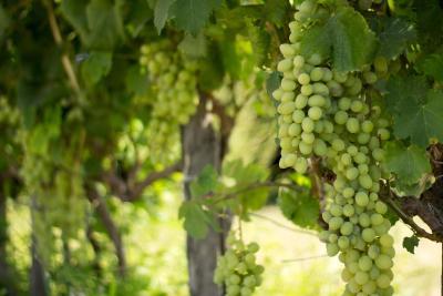 Agriturismo Il Gelsomino Ritrovato - Milazzo - Foto 18