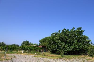 Agriturismo Il Gelsomino Ritrovato - Milazzo - Foto 17