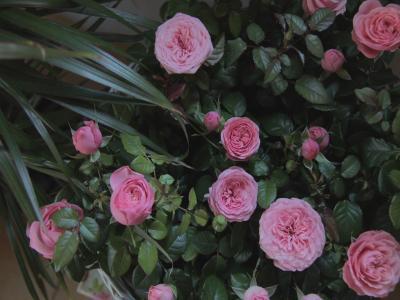B&B La Rosa dei Venti - Caltagirone - Foto 18