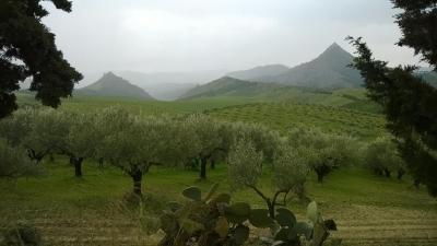 Masseria Floresta - San Cono - Foto 31