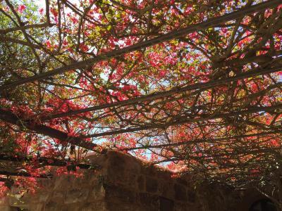 Dammusi Bugeber - Pantelleria - Foto 7
