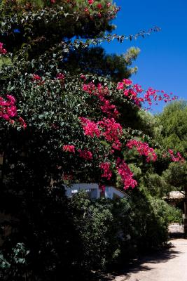 Miramare Residence - Favignana - Foto 17