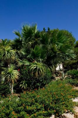Miramare Residence - Favignana - Foto 16