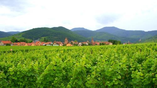 Hotel Pictures: , Sigolsheim