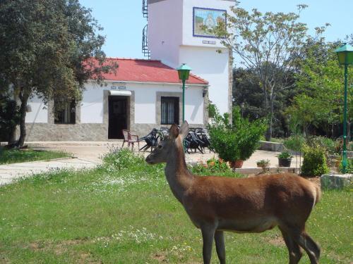 Hotel Pictures: , Andújar