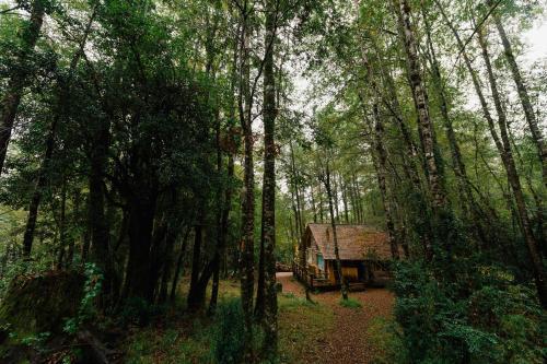 Huilo Huilo Cabañas del Bosque