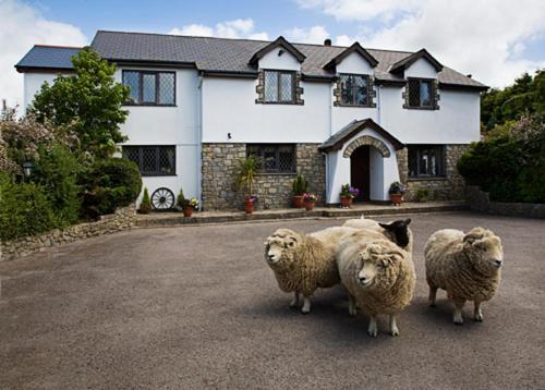 Hotel Pictures: Sheepleys B&B, Cowbridge