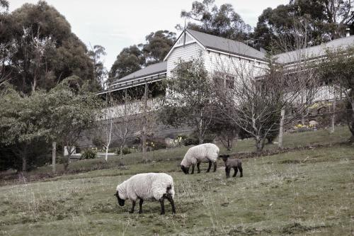 Hotelbilleder: House on the Hill Bed and Breakfast, Huonville