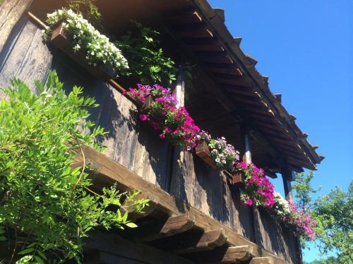 Hotelfoto's: Stefanina Guesthouse, Bozhentsi