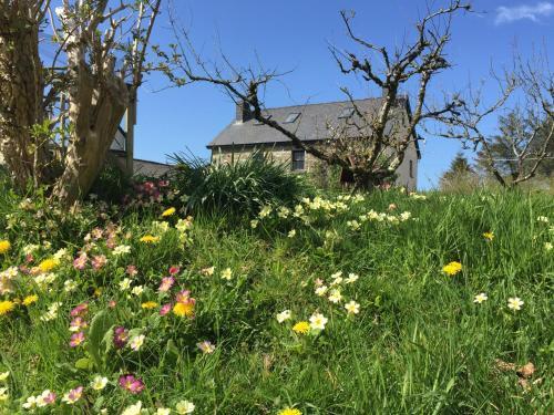 Hotel Pictures: Gorslwyd Farm, Aberporth