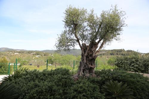 Hotel Pictures: Apartamentos Luxsol, Sant Carles de Peralta