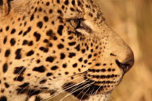 Leopard Mountain Safari Lodge
