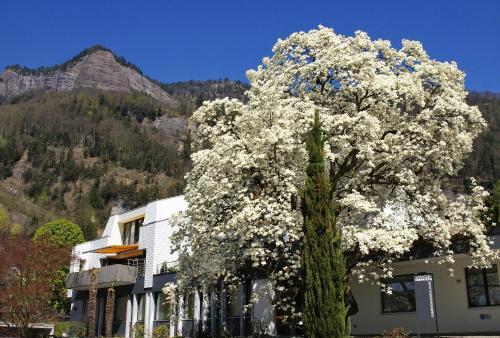 Hotel Pictures: , Vitznau
