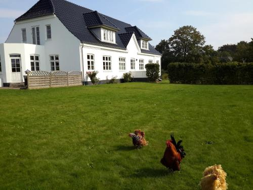 Hotel Pictures: Engly Bed & Breakfast, Næstved
