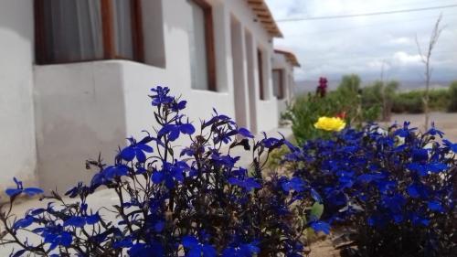 Φωτογραφίες: Cabañas Lunita, Fiambala