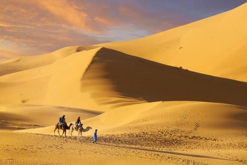 Camel Trek Bivouac