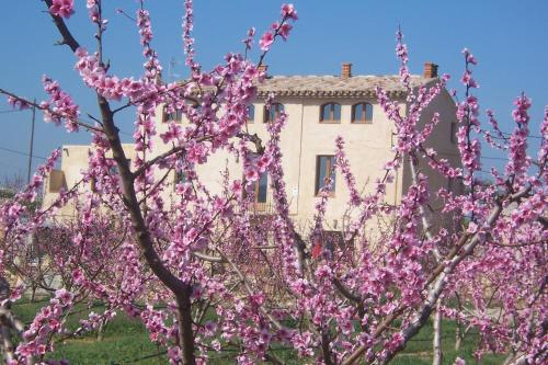 Hotel Pictures: , Benissanet