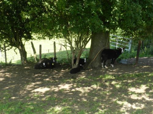 Фотографии отеля: Xhawirs Horse Farm, Soumagne