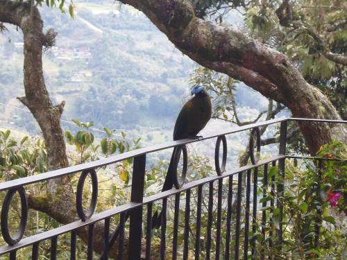 Hotel Pictures: La Casa En El Aire, Santa Elena