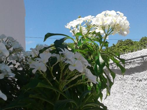 Hotel Pictures: Casa Mar de Carapibus, Conde