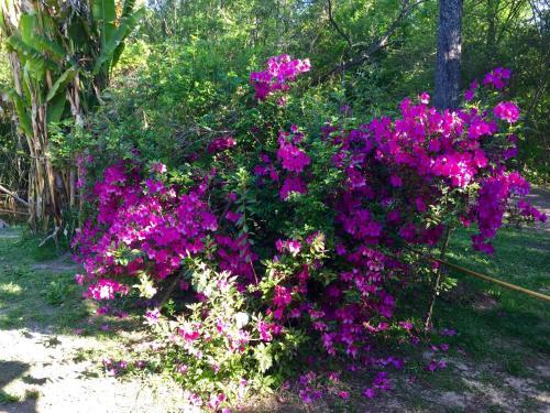 Fotos del hotel: Aracataca - la casita del tigre, Dique Luján