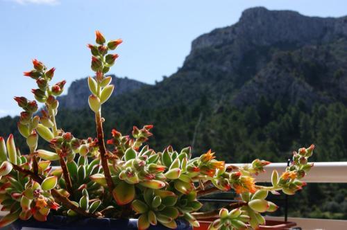 Hotel Pictures: , Tivissa