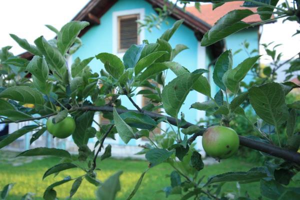 Foto Hotel: Villa Green Garden, Osijek
