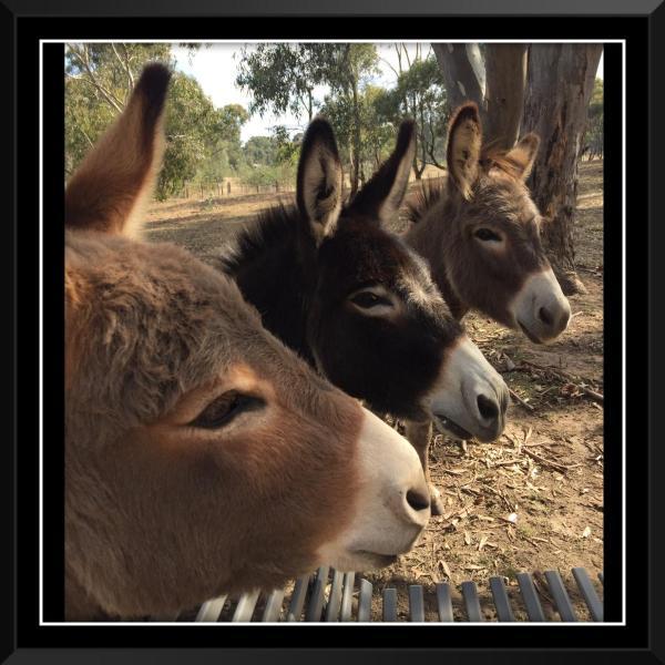 Фотографии отеля: Donkey Tales Farm Cottages, Талбот