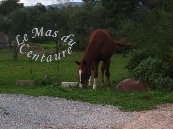 Hotel Pictures: Le Mas du Centaure, Puget-sur Argens