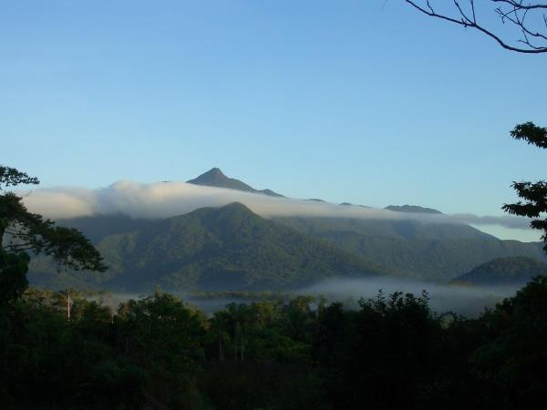 Hotel Pictures: Epiphyte B & B, Cape Tribulation