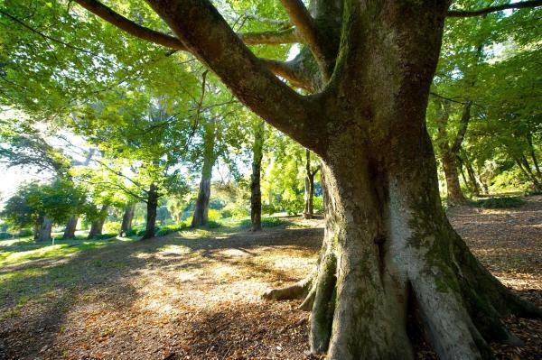 Hotelbilleder: Georgie Gardens, Daylesford