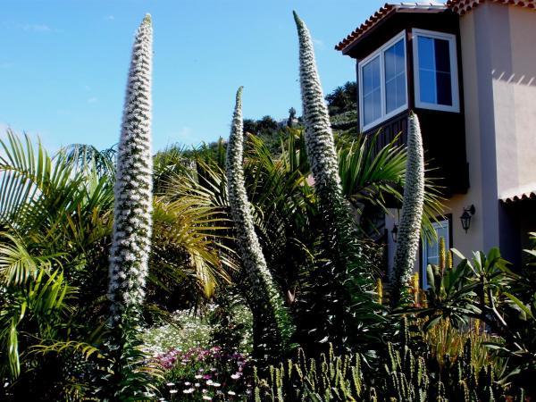 Hotel Pictures: Apartamento Mar y Teide, Sauzal
