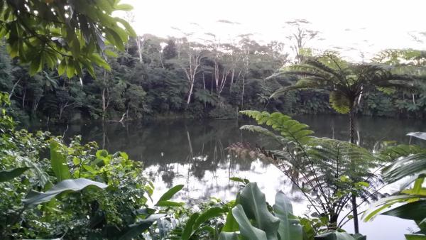 Hotel Pictures: Colo-I-Suva Rainforest Eco Resort, Suva