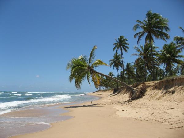 Hotel Pictures: Paribahia, Praia do Forte