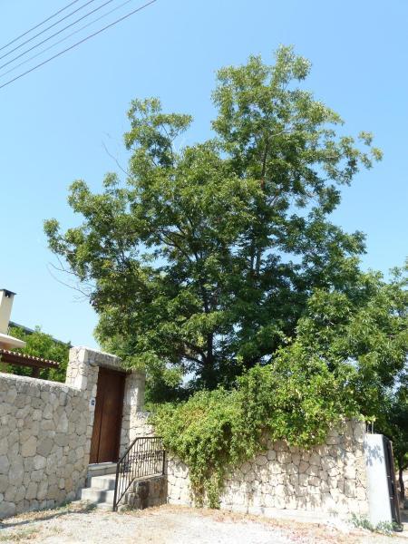 Hotel Pictures: Farm House, Kyrenia