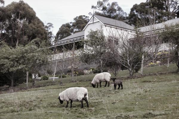 Фотографии отеля: House on the Hill Bed and Breakfast, Huonville