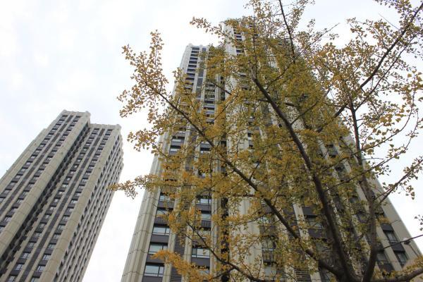 Hotel Pictures: Dalian Xinghai Square Holiday Apartment, Dalian
