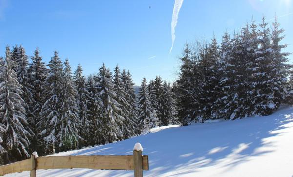 Hotel Pictures: Ferienwohnung Braun, Frauenwald